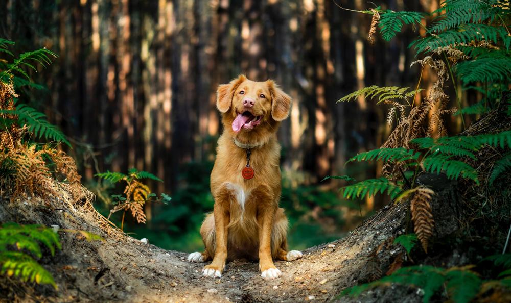 ondernemersidee-honden-uitlaat-service